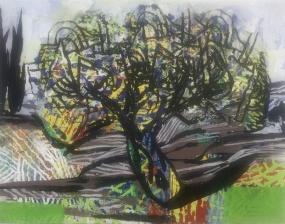 Olive Tree 6