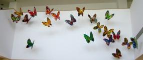 Butterflies flight